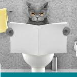 علاج اسهال القطط