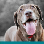 علاج رائحة فم الكلاب