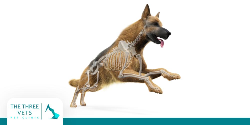 لين العظام عند الكلاب