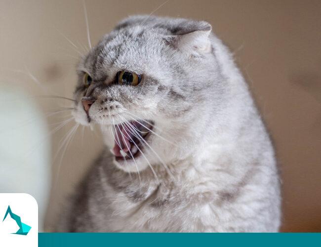 مرض السعار عند القطط