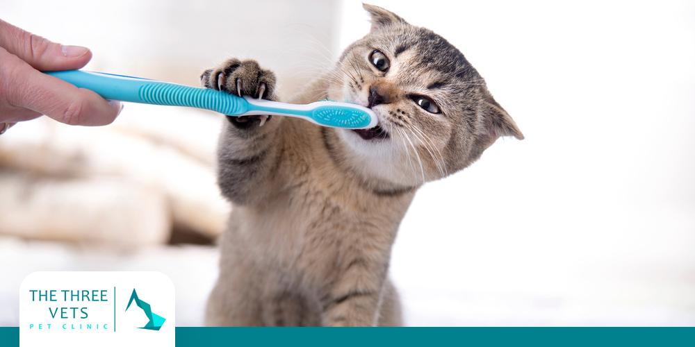 كيفية تنظيف اسنان القطط