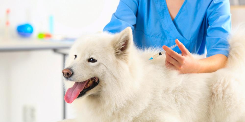 تطعيمات الكلاب و مواعيدها و أسعارها